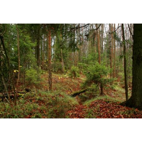 Чаща леса