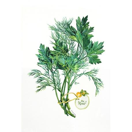 Укроп и петрушка