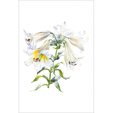 White Tubular Lily