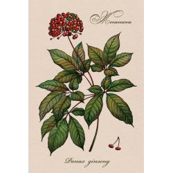 Целебные ягоды России. Женьшень