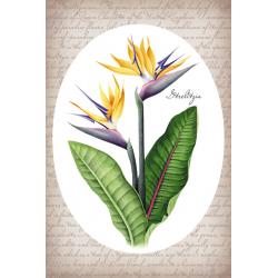 Тропические растения. Стрелиция