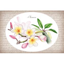 Тропические растения. Плюмерия