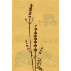 Wilting. Motherwort