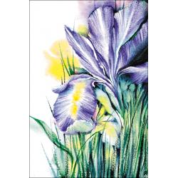 Frost Iris