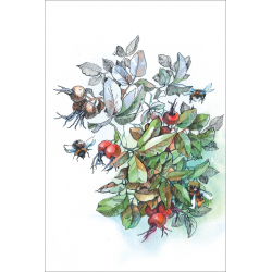 Bumblebees and wild rose