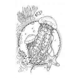 Медузы и морская звезда