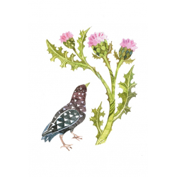 Starling and thistle