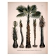 Natural history of a palm tree collection
