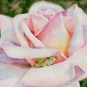 Сказка в розе (Reference photo by  Karen A. Stafford)