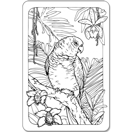 Parrot and orchids