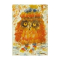 Owl in socks