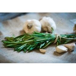 Fresh rosemary and fresh garlic