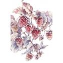 Raspberries. Amateur alchemy