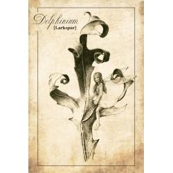 Creatures. Delphinium, Larkspur