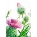 The Universe underfoot …. thistle constellation