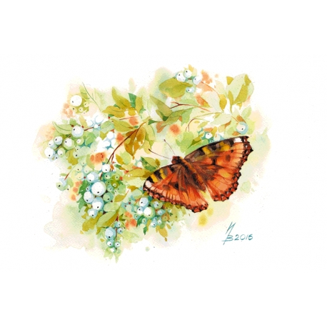 Butterfly and snowberry