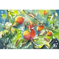 Яблоки в моём саду