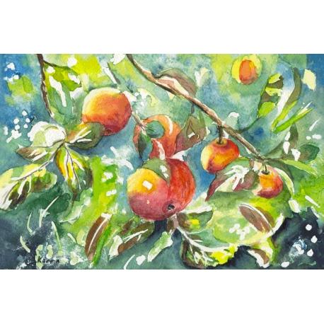 The apples in my garden