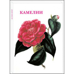 Camellia - a set of 15 postcards