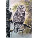 Spruce owl