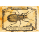Steampunk insect. Bug